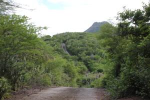 Straße durch den Christoffel Park auf Curacao
