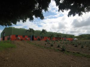 Dinah Veeris Aloe Vera Plantage auf Curacao