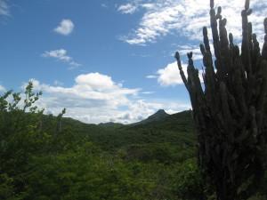 Christoffel Park auf Curacao