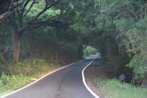 Straße Curacao Dschungel