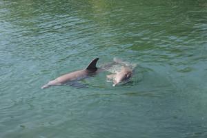 Delfine in Mexiko