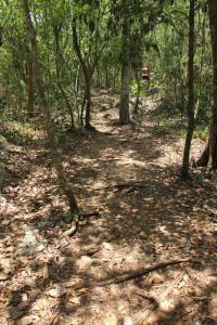 Mexiko Ausflug Dschungel