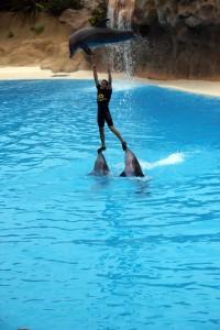 Delfinshow im Loro Parque auf Teneriffa