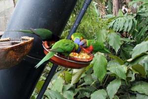 In der Besuchervoliere vom Loro Parque kommt nan ganz nah an Papageienartige heran