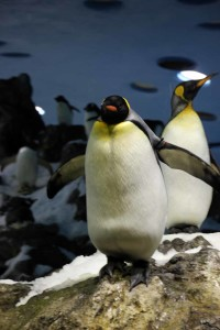 Pinguine im Loro Parque