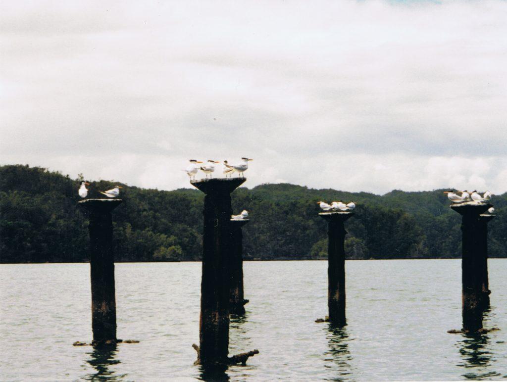 Dominikanische Republik, Vögel auf zerfallener Mole