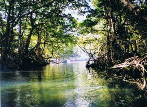 Mangroven, Dominkanische Republik
