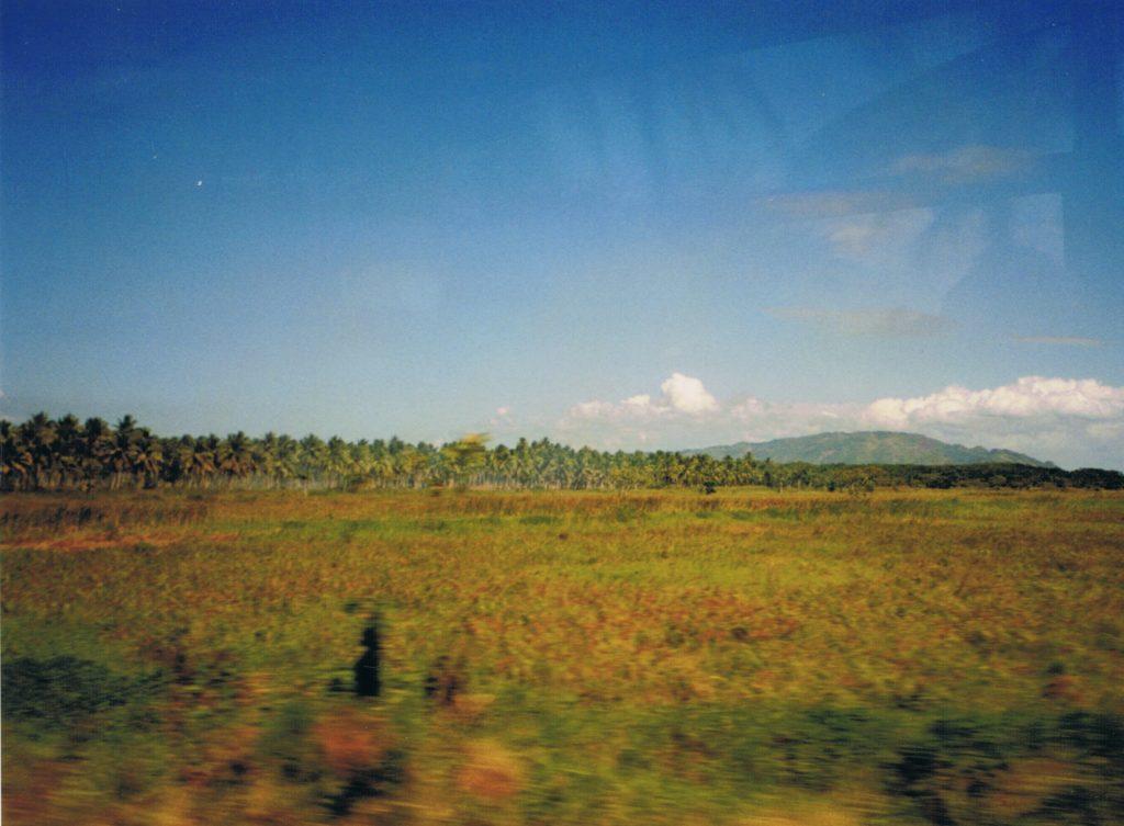 Zuckerrohrfelder Dominikanische Republik